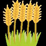 大麦麦芽だけを使用するのがモルトウイスキー