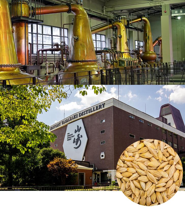山崎蒸溜所の単式蒸留器とモルト