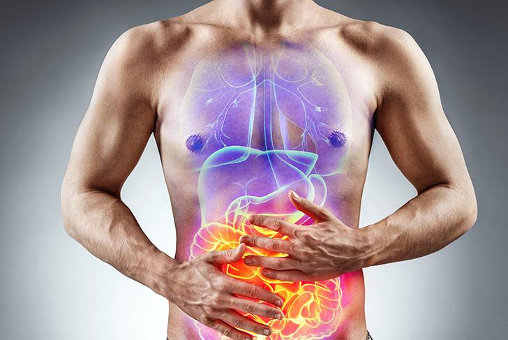 肝臓と腸と胃